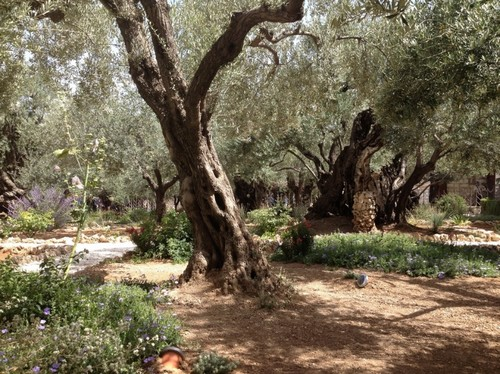 Inside the Garden of Gethsemane
